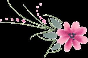 pink flower 300x199 pink flower