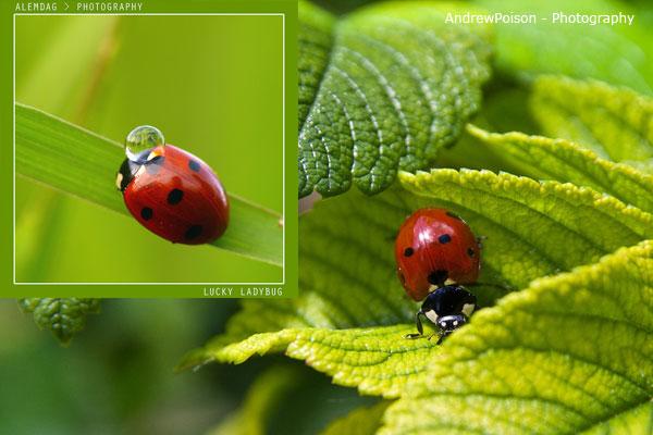 Ladybug nail art tutorial 7 SIMPLE: Lovely Ladybug Nail Art Tutorial